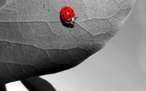 двухцветная картинка - черный и красный цвета
